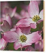 Pink Flowering Dogwood - Cornus Florida Rubra Wood Print