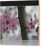 Pink Flowering Tree In Spring Framed Wood Print