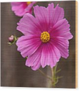 Pink Flowers And Wood  Wood Print