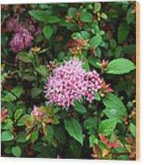 Pink Flowers Of Little Bavaria Wood Print
