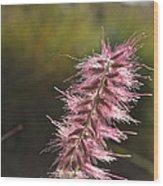 Pink Fuzzy Wood Print