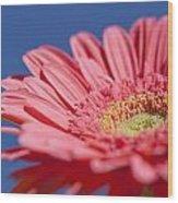Pink Gerber 2 Wood Print by Al Hurley