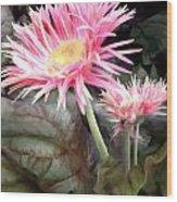Pink Gerber Daisies Wood Print