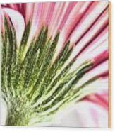 Pink Gerbera 9 Wood Print