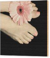 Pink Gerbera Daisy Wood Print by Diana Lee Angstadt