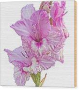 Pink Gladiolus Wood Print