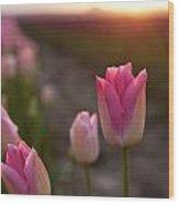 Pink Glory Wood Print