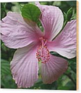 Pink Hibiscus Wood Print by Gregory Young