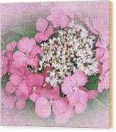 Pink Lace Cap Hydrangea Flowers Wood Print