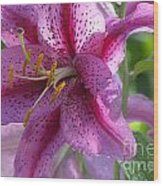 Pink Lily After The Rain Wood Print