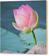 Pink Lotus 2 Wood Print by Julie Palencia