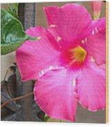 Pink Mandevilla Wood Print