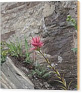 Pink Mountain Flower Wood Print