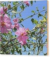 Pink Musk Mallow Wood Print