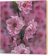 Pink On Pink Wood Print