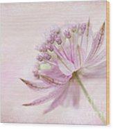 Pink Palette Wood Print by Jacky Parker