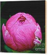 Pink Peony Bud Wood Print