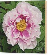 Pink Peony Flowers Series 1 Wood Print
