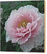 Pink Peony Flowers Series 2 Wood Print