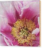 Pink Peony Flowers Series 8 Wood Print