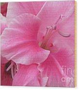 Pink Perfusion Wood Print