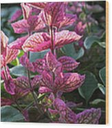Pink Periwinkle Wood Print