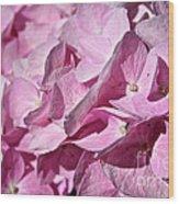 Pink Petal Pushing Wood Print