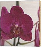 Pink Phalaenopsis Orchid  Wood Print