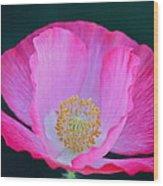 Pink Poppy 2 Wood Print