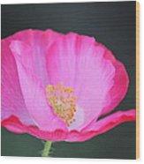 Pink Poppy 3 Wood Print
