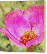 Pink Portulaca Wood Print
