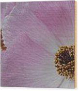 Pink Prickly Poppy Wood Print