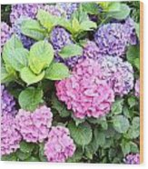 Pink Purple Hydrangeas Wood Print
