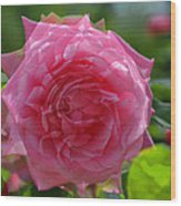 Pink Puzzled Rose Wood Print
