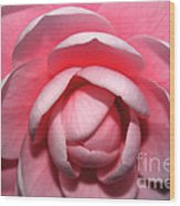Pink Rhodendrum Wood Print