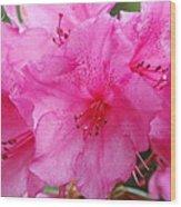 Pink Rhody Wood Print