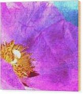 Pink Rock Rose On Blue Wood Print