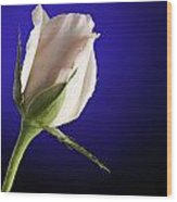 Pink Rose Bud Blue Background Wood Print by M K  Miller