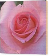 Pink Rose Wood Print by Naomi Berhane