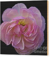 Pink Rose On Black Wood Print