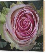 Pink Rose Spiral Wood Print