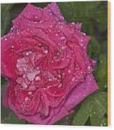 Pink Rose Wendy Cussons With Raindrops Wood Print