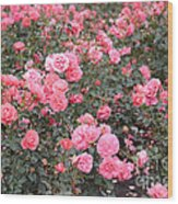 Pink Roses Canvas Wood Print