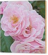 Pink Roses II Wood Print