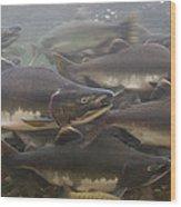 Pink Salmon Oncorhynchus Gorbuscha Wood Print