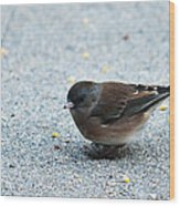 Pink-sided Junco Wood Print