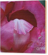 Pink Silk Wood Print
