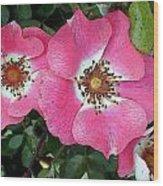 Pink Single Roses Wood Print