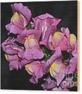 Pink Snapdragons 2 Wood Print