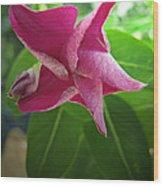 Pink Star Wood Print